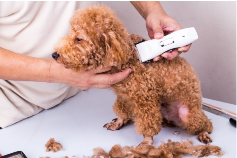 Top 5 Best Silent Dog Clippers for Anxiety free dog grooming