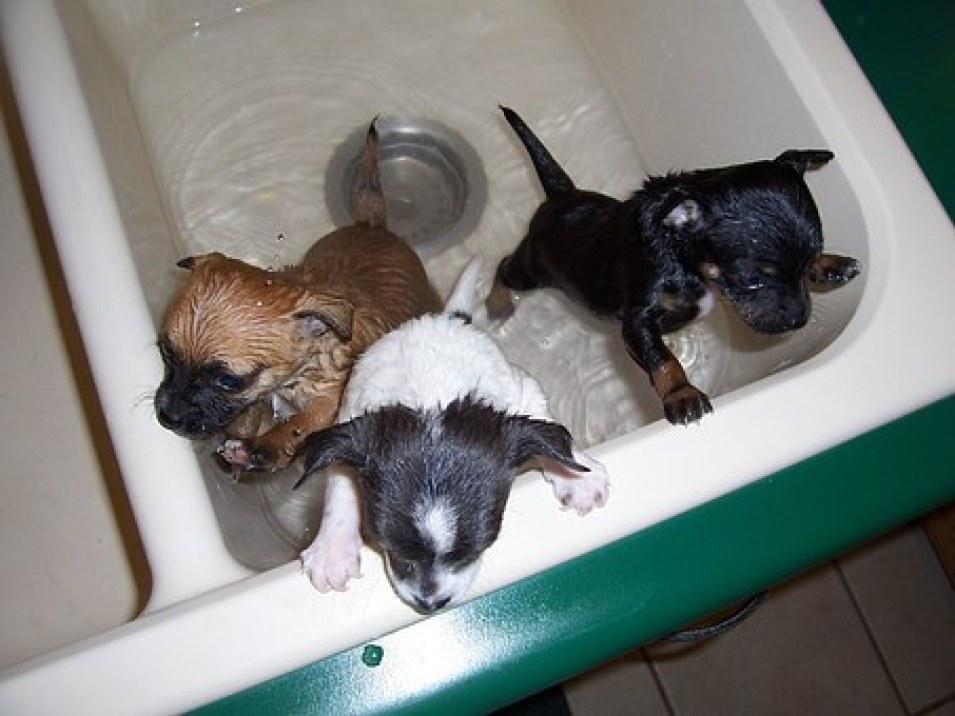 Best Dog Grooming Tub