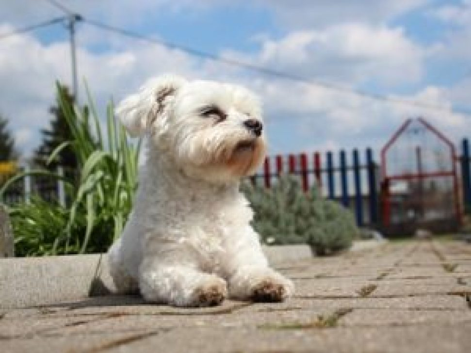 12 Best Dog Foods for Toy Breeds [2019 Buyer's Guide]