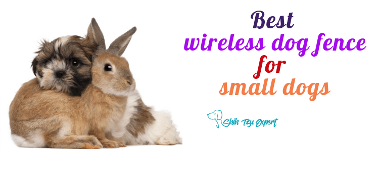 Best wireless fence for small dog for small dogs