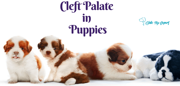 Cleft Palate in Puppies