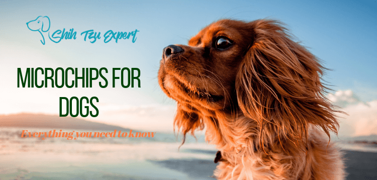 Everything you need to know about microchips for dogs