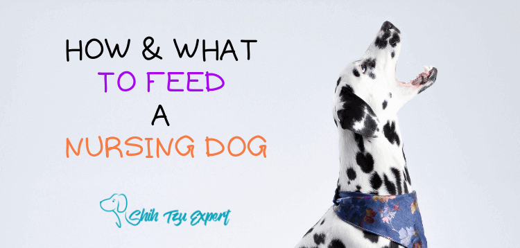 How & What to Feed a Nursing Dog [Things You Probably Didn't Know]