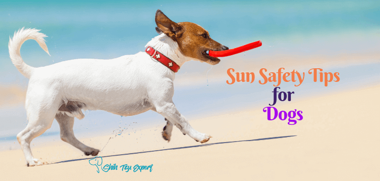 Sun Safety Tips for Dogs : Easiest Way to Protect Your Pup