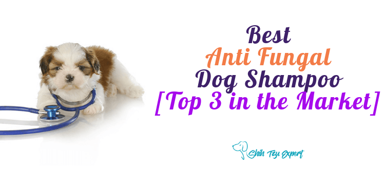 The Best Anti Fungal Dog Shampoo [Top 3 in the Market]