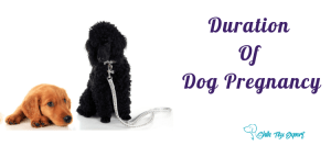 What is The Duration of Dog Pregnancy