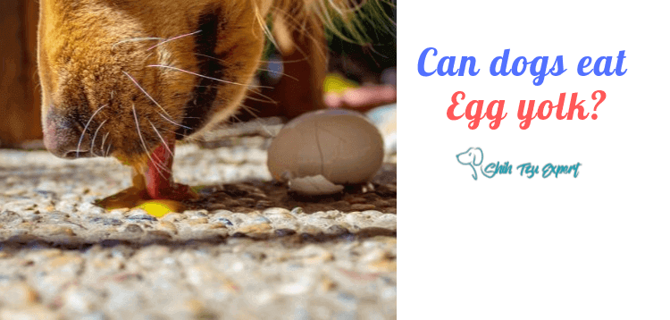 Can dogs eat egg yolk?