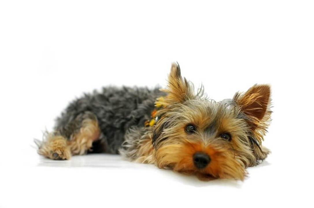 Best Tick Shampoo For Dogs