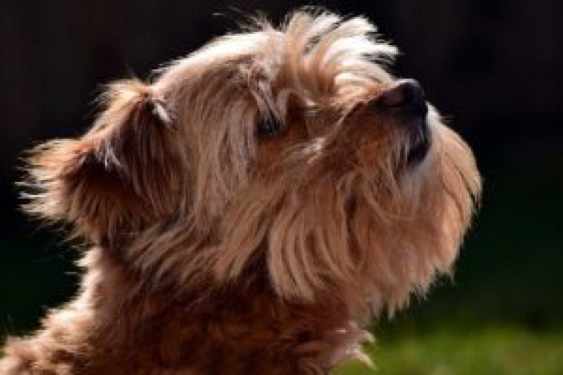 Best Dog Brush for Short Hair