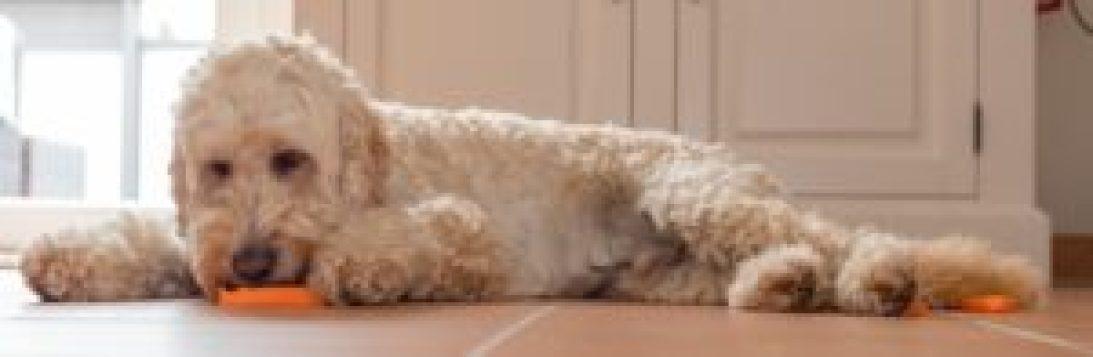 The Best Dog Shampoos for Sensitive Skin