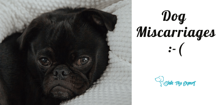 Dog Miscarriages (1)