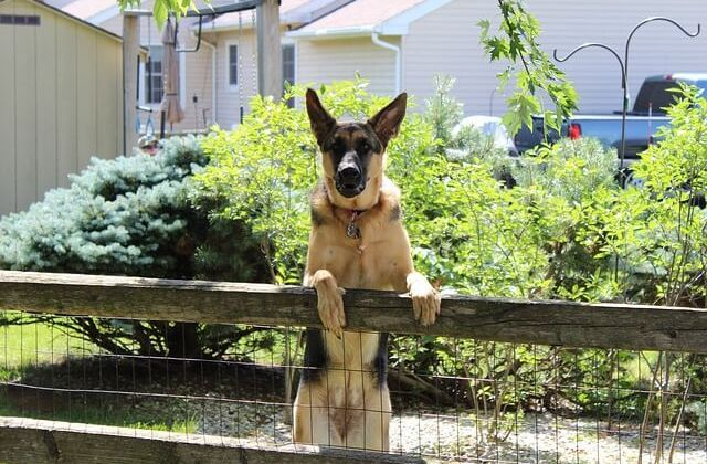 Wireless Pet Fence Installation [Do's and Don'ts]
