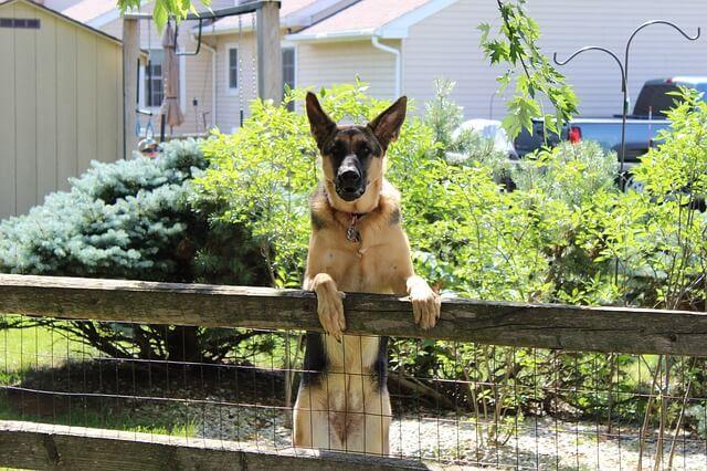 Wireless Pet Fence Installation