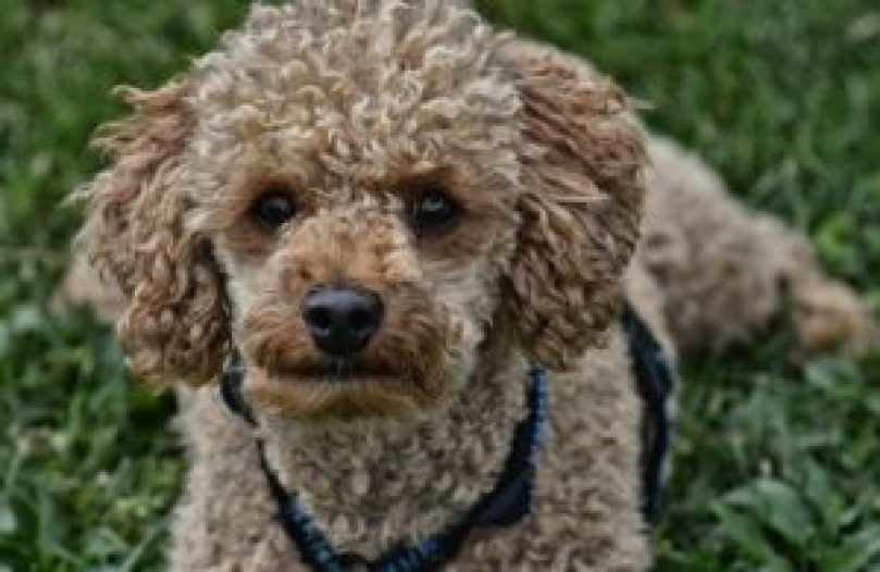 How to Stop Dog Hair From Matting