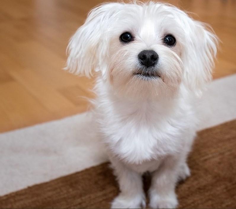 How to Teach a Dog to Use a Dog Door