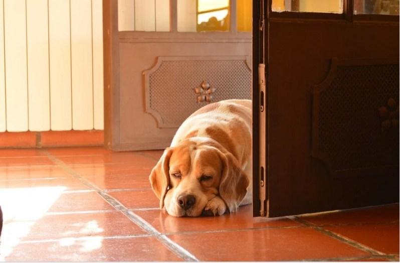 Benefits of the PetSafe Freedom Door: