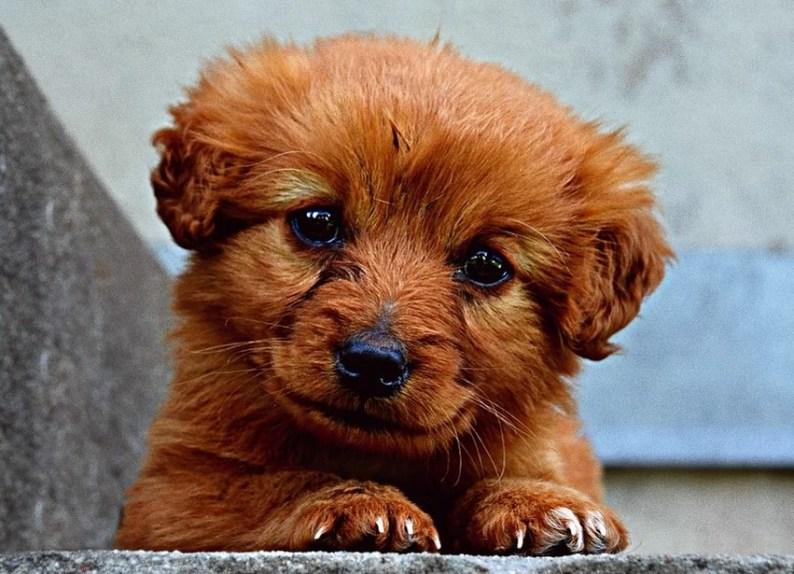 Puppy's Haircut