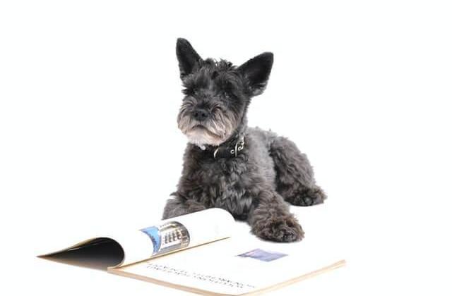 Doggo Language [Doggolingo, also referred to as Woof, Bork, and Dog Speak]