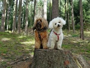 How to Clean, Bathe & Groom a Female Dog in Heat