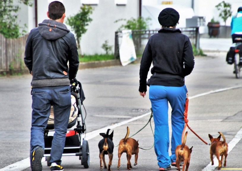 Dog Strollers for Bulldogs
