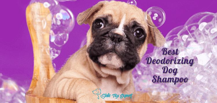 Best Deodorizing Dog Shampoo