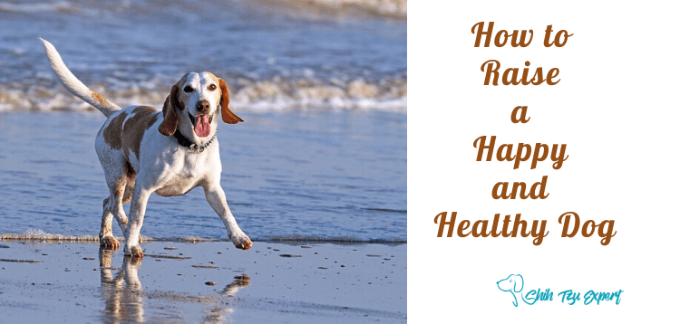 How to Raise a Happy and Healthy Dog (1)