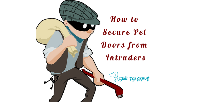 How to Secure Pet Doors from Intruders (1)