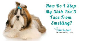 How Do I Stop My Shih Tzu'S Face From Smelling