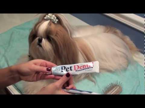 Grooming Series: Bedtime Brushout