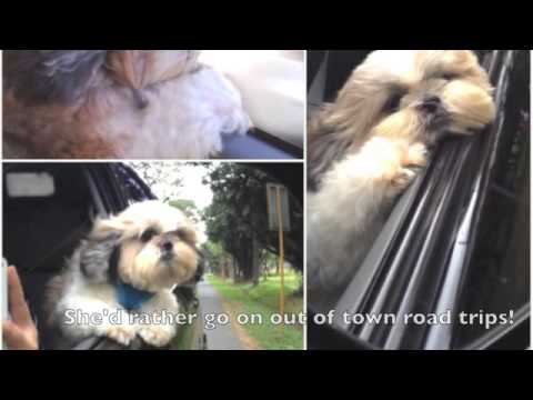 Support and Save Snookie Shihtzu