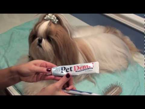 Shih Tzu Bedtime Brushout Session