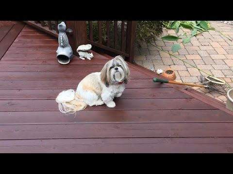 Preparing fish pond net for falling leaves | Frogs | Lacey is mellow outside