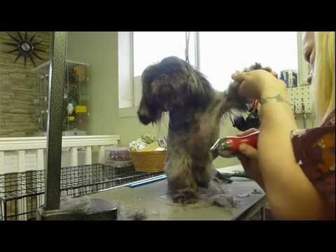 How to groom a Shih tzu under 13 Minuets!!