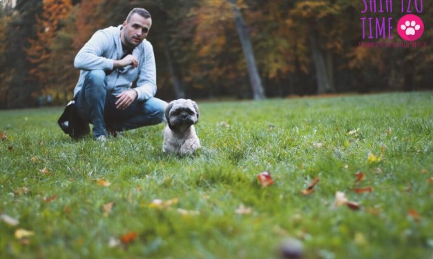 When Shih Tzus Eat Poop – What You Need to Know