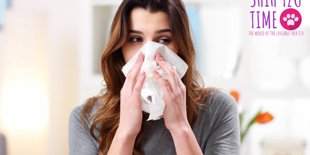 Are Shih Tzus Hypoallergenic?