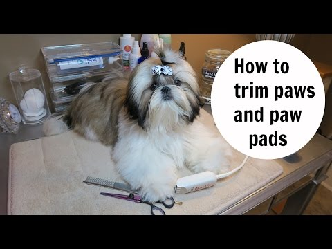 How to trim Shih Tzu puppies Paws