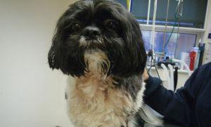 Pet shih tzu is stabbed in horrific knife attack in Hebburn