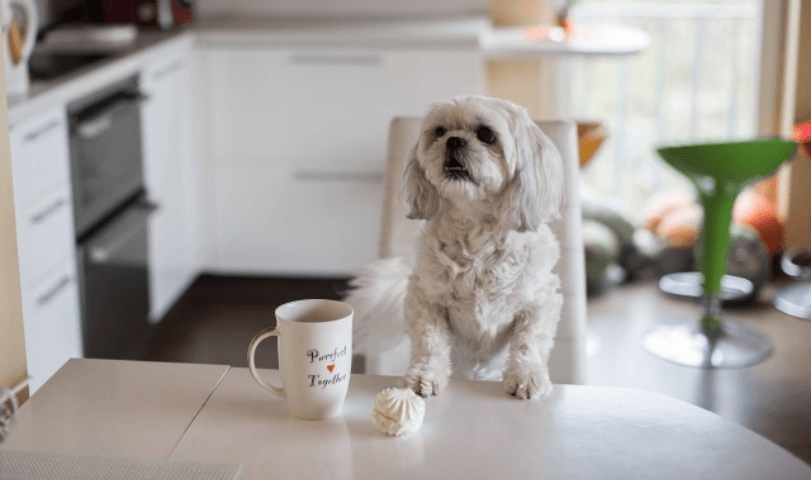 RECOMMENDED DIET FOR YOUR OLD SHIH TZU