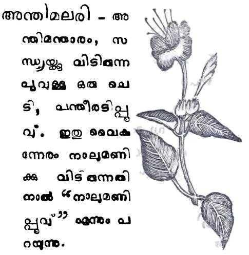 അന്തിമലരി