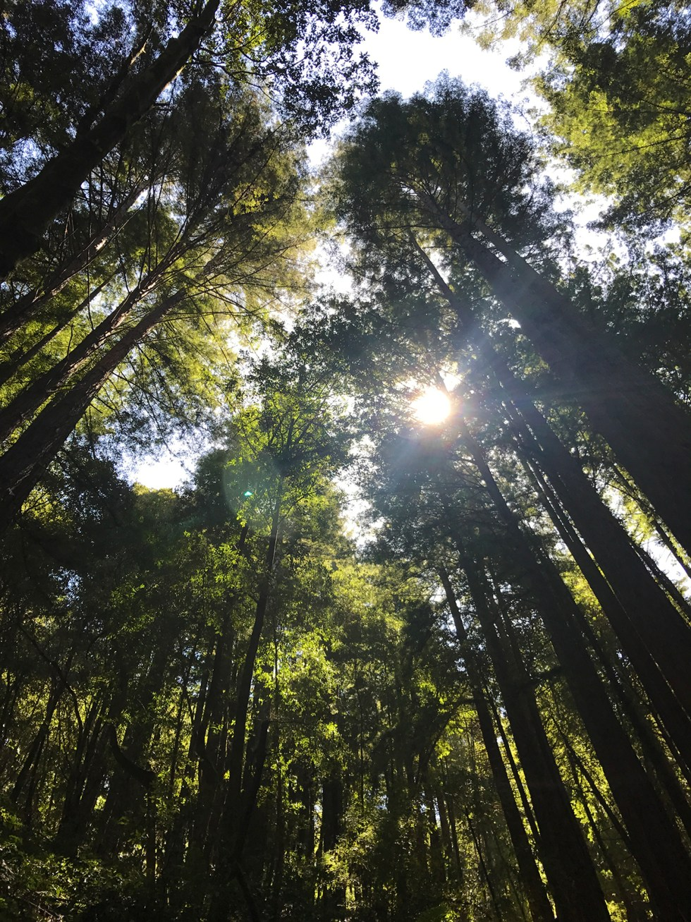 Day Trip: Hike Buddha Loop Trail Santa Cruz