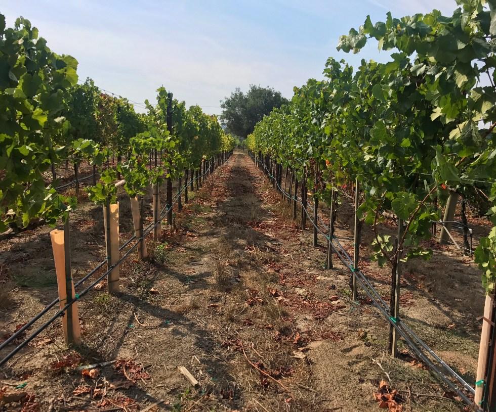 Emeritius Vineyards // Shikha la mode