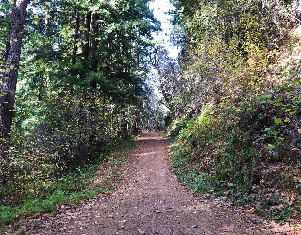 Purisima Creek trails // winter hikes // Shikha la mode