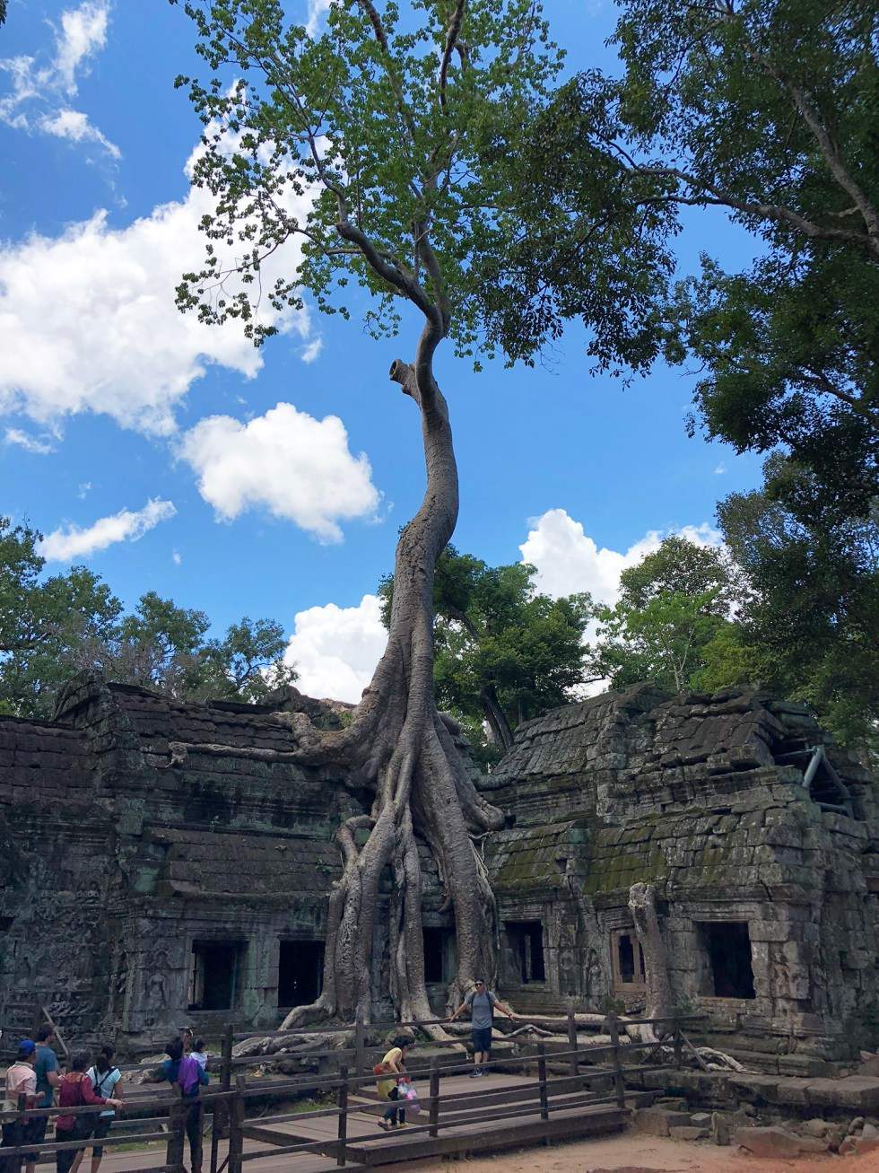 ta-prohm-temple-siem-reap-tomb-raider