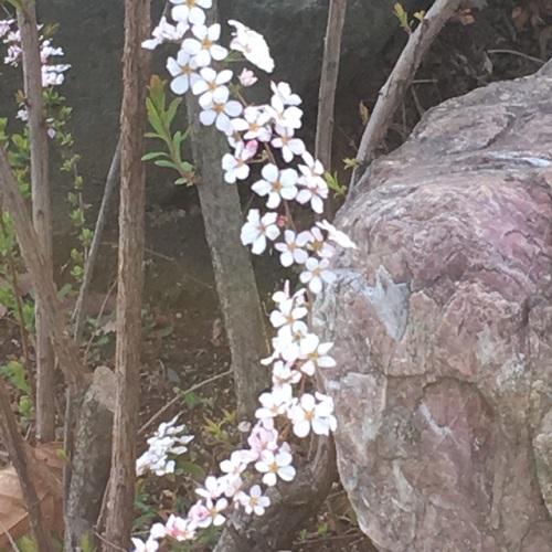 yukiyanagi2