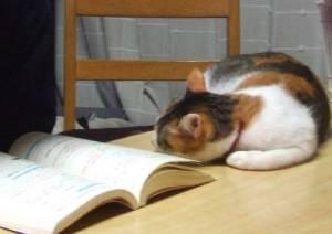 勉強Miy1