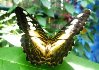 Butterfly at Butterfly house