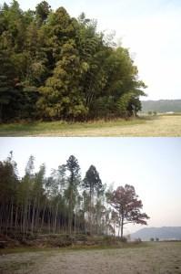 伐採前後の比較-01