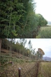 伐採前後の比較-03