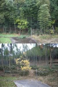 伐採前後の比較-04