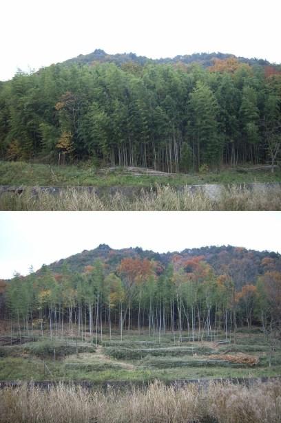 伐採前後の比較-05